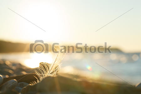 canstockphoto19623679comp
