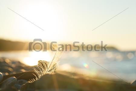 canstockphoto19623679comp